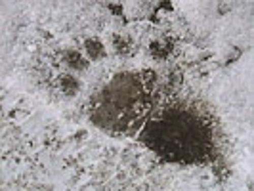 Casa-Camilla-Aspen-Vaction-Rental-Ski-bearprint